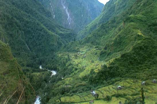 Forest-of-Nepal